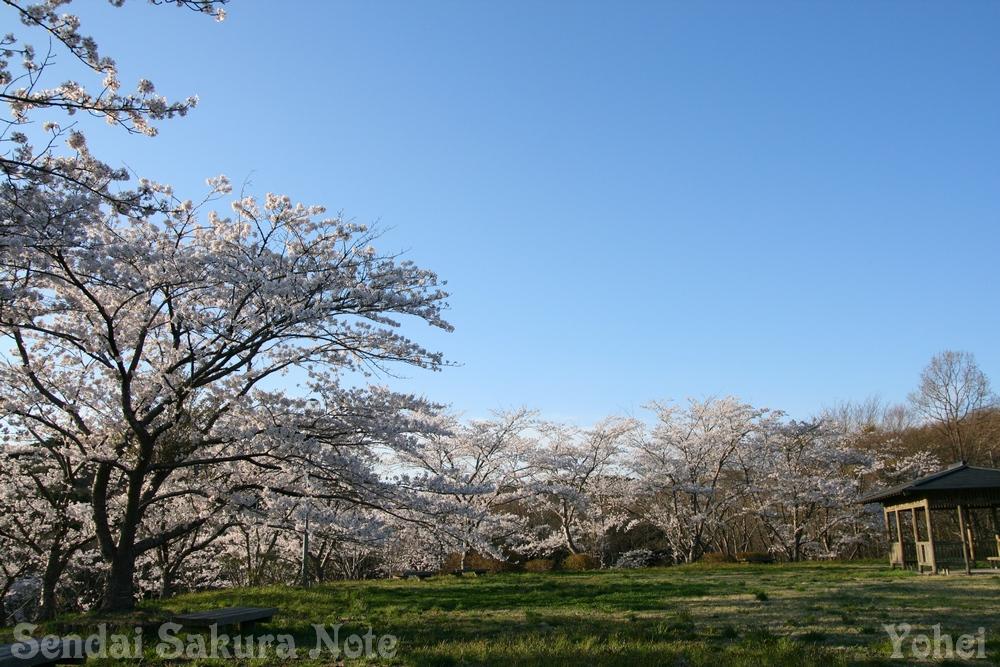 仙台桜ノート (for 2017年春):...